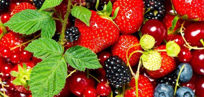 Kompot z owoców